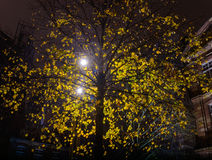 City lantern light through leaves of autumn tree Royalty Free Stock Photography