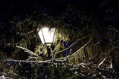 City light with snow and tree at night in winter Royalty Free Stock Photos