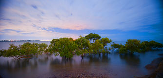 City lights behind mangroves Stock Images