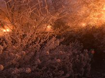 The city lights in a winter town. Foggy and snowy weather. Bushes and trees with white frost. Royalty Free Stock Images