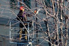 City lopping. Worker lopping city trees with a chain saw royalty free stock image