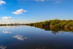City and mangrove outline on the lake. A look at a city outline and reflection on calm water and the mangrove forest Royalty Free Stock Image