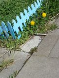 City mini garden with bright blue fence and tiles Royalty Free Stock Image