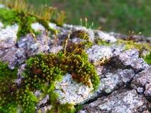 City of moss Royalty Free Stock Photos