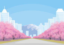 City, mountain and Sakura Royalty Free Stock Photos