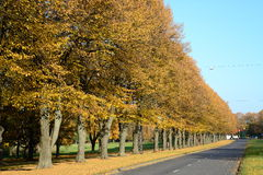 City and nature. Autumn trees by the road Royalty Free Stock Photo