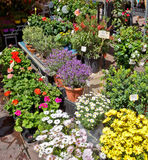 City of Nice - Flowers in the street market Royalty Free Stock Images
