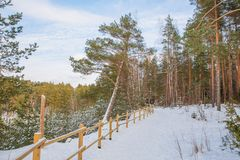 Old sand quarry and trees at city Ogre. Travel photo. 2018. City Ogre, Latvia. Old pine at sand quarry. Snow and ice, nature photo. Travel photo at Latvia. 2018 Stock Photo