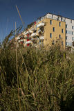 City overgrown by wild plants Stock Photography