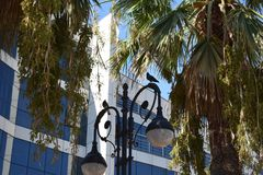 City palm. Beautiful summer green Royalty Free Stock Photography