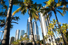 City Palms. Palm trees in front of a cityscape Royalty Free Stock Photography