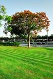 City park. A view of a city park Stock Photo
