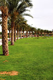 City park. A view of the palm trees at the park Royalty Free Stock Image