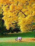 City park in autumn. Bench and oak in city park in the autumn royalty free stock photo