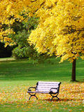 City park in autumn. Bench and maple in city park in the autumn royalty free stock images