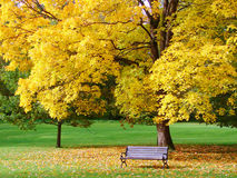 City park in autumn. Bench and maple in city park in the autumn royalty free stock photos