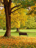 City park in autumn. Bench and oak in city park in the autumn Stock Photo