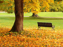 City park in autumn. Bench and oak in city park in the autumn Royalty Free Stock Images