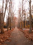City park in autumn forest Royalty Free Stock Images