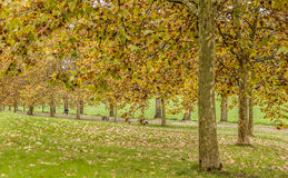 City park in Autumn Stock Images