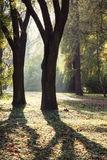 City park by autumn. Autumn in the city park. Natural scene Stock Photos