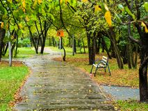 City park in autumn rain royalty free stock images