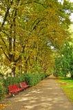 City park in autumn, Riga stock image