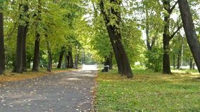 City park in autumn stock video footage