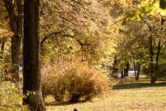 City Park in the autumn warm day. stock photo