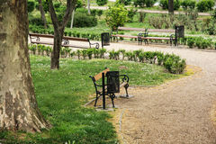 City park with benches and sycamore tree Royalty Free Stock Image