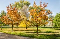 City Park. Novi Sad in autumn colors Royalty Free Stock Photos