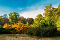 City park in deep autumn. Lovely urban scenery in the morning. natural colorful background stock photos