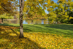 City Park in the Fall with leaves in Boise Idaho Royalty Free Stock Images