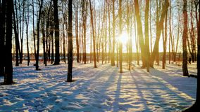 City park in February at sunset. Photographed in the city park of Volkhov in February at sunset Royalty Free Stock Image