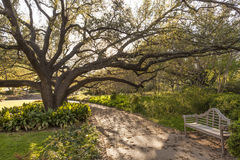 City park of Fort Worth, TX, USA. Bench and tree in the city park of Fort Worth, TX, USA stock images