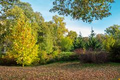 City park lawn covered with foliage. Beautiful autumn scenery stock photo
