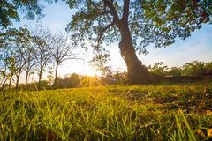 City park light beam in evening with green grass and trees Stock Images