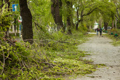 City park after natural cataclysm. Falling tree and branches after natural disaster. City park after catastrophe. Calamity in spri Royalty Free Stock Photos