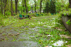 City park after natural cataclysm. Falling tree and branches after natural disaster. City park after catastrophe. Calamity in spri Royalty Free Stock Photography