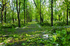 City park after natural cataclysm. Falling tree and branches after natural disaster. City park after catastrophe. Calamity in spri Stock Photography
