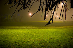 City park at night. City park  shot through wet branches on a foggy night. Horizontal orientation Stock Photos