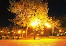 City park at night Royalty Free Stock Photos