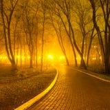 City park at night Stock Photography