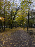 City Park by night royalty free stock images