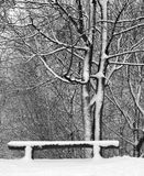 City park after night snow storm. Snow covered bench and trees Royalty Free Stock Photo