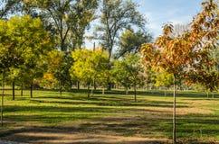 City Park. Novi Sad in autumn colors Stock Photo