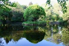 City park pond Stock Photos
