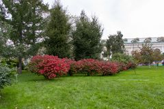 City park of rest. Ate green on the lawn. Bushes with red flowers, green lawn lawn stock photography