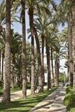 In city park Santa Pola. Alicante Royalty Free Stock Image