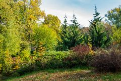 City park scenery with yellow foliage. Lovely nature background stock image